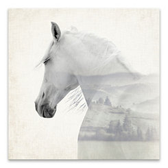 Horse Dreams Canvas Art Print