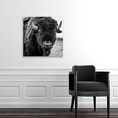 American Bison on Field Canvas Art Print