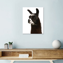 Close Up of Llama Canvas Art Print