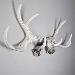 Antler Coat Rack