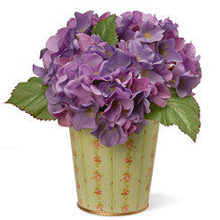 Purple Hydrangea in Floral Planter