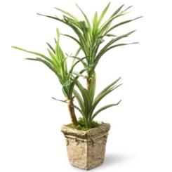 Yucca Plant in Ceramic Planter