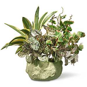Assorted Greenery in Ceramic Planter