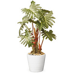 Philodendron Tree in White Stripe Planter, 21 in.