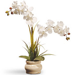 Cream Orchid in Round Planter, 24 in.