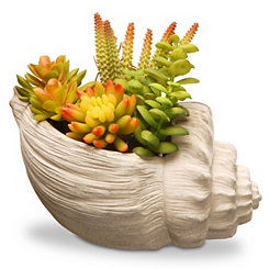 Succulent Arrangement in Ivory Seashell