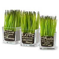 Sentiment Glass Potted Plants, Set of 3