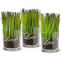 Live Laugh Love Potted Plants, Set of 3