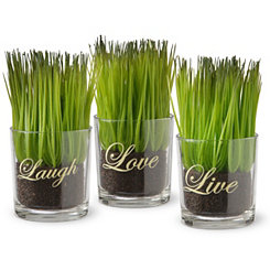 Live Laugh Love Potted Plants, Set of 3