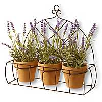 Lavender Plants on a Hanging Wire Shelf