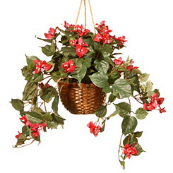 Red Blooms with White Centers Hanging Basket