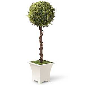 Single Ball Topiary in Wood Planter, 30 in.