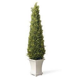 Juniper Cone Topiary in White Planter, 42 in.