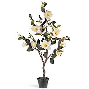 Magnolia Tree in Black Planter, 48 in.
