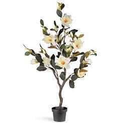 Magnolia Tree in Black Planter, 48 in.