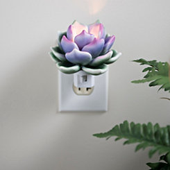Succulent Night Light