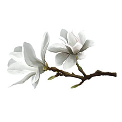 Magnolia Blossom Wall Decal