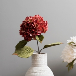 Red Fall Hydrangea Stem