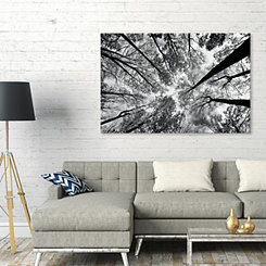 Looking Up Forest Canvas Art Print