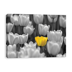 Tulips Coated Canvas Art Print