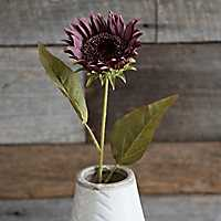 Purple Fall Sunflower Stem