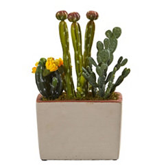 Mixed Cactus Arrangement in Ceramic Planter