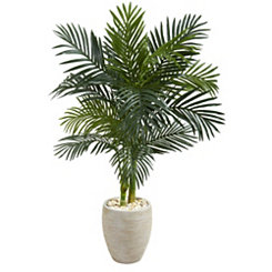 Golden Cane Palm in Natural Planter, 4.5 ft.