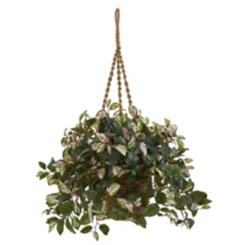 Hoya Plant in Hanging Basket
