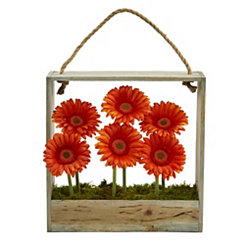 Orange Gerber Daisy Arrangement in Hanging Planter