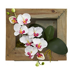 Phalaenopsis Orchid Arrangement in Wooden Frame