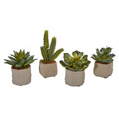 Mixed Succulent Arrangements, Set of 4