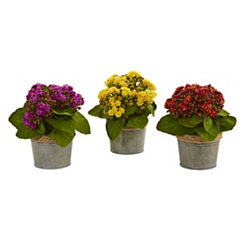 Kalanchoe Arrangements in Weathered Pots, Set of 3
