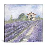 Lavender Fields Canvas Art Print