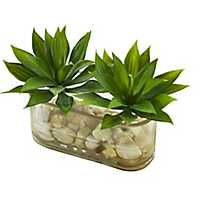Mini Agave Succulent Arrangement in Glass Vase
