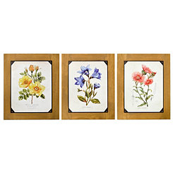 Botanical Wood Framed Art Prints, Set of 3