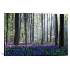Bluebell Forest Canvas Art Print