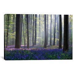 Bluebell Forest Canvas Art Print