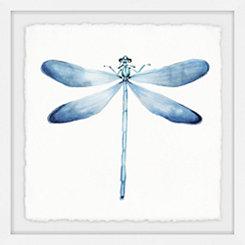 Pastel Blue Dragonfly Framed Art Print