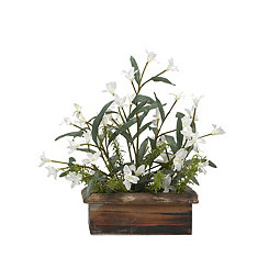 White Phlox Arrangement in Wood Planter