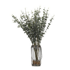 Eucalyptus Stems in Glass Vase