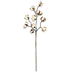 Cotton Stalks, Set of 6