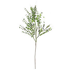 Eucalyptus Branches, Set of 6