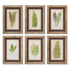 Brown Fern Framed Art Prints, Set of 6