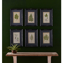 Black Fern Framed Art Prints, Set of 6
