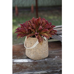 Natural Cement Basket Planter with Handle