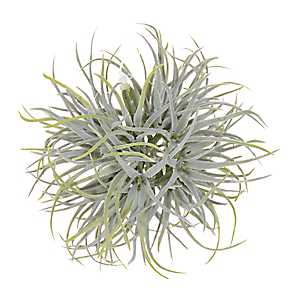 Hanging Air Plant Orb