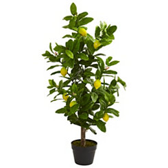 Lemon Tree, 3 ft.