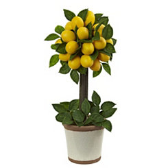 Lemon Topiary in Decorative Pot, 18 in.