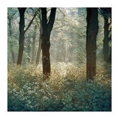 Morning in the Forest Canvas Art Print