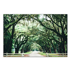 Oak Tree Arch Photography Canvas Art Print